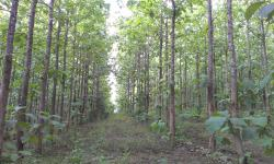 Trees to provide water, pure water and comfortable living for the planet