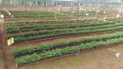 Trees4Trees seedlings