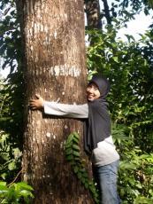 Mature Tree