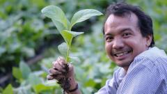 Teak seedling ready to plant